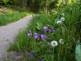 Blumen am Wegrand_web